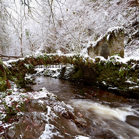 Buy canvas prints of  Winter at Reelig by Macrae Images