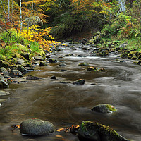 Buy canvas prints of Reelig Glen by Macrae Images