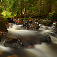 Buy canvas prints of Reelig Glen by Macrae Images