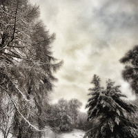 Buy canvas prints of Winters Woodland Walk by Fraser Hetherington