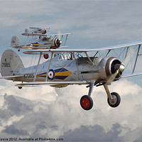 Buy canvas prints of Gloster Gladiator by Pat Speirs