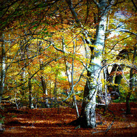 Buy canvas prints of Epping Forest by Lynn hanlon