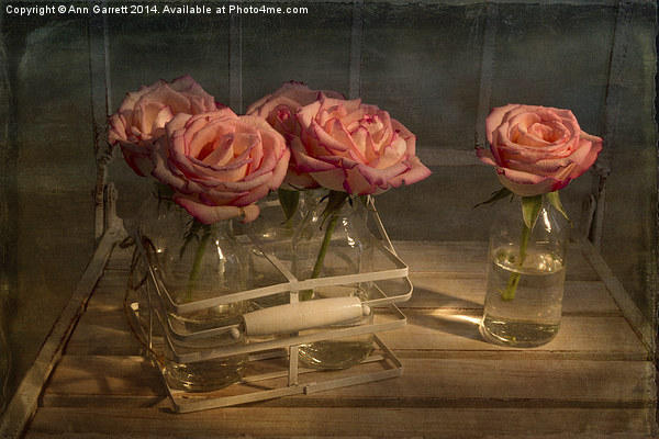 Milk Bottle Roses Canvas print by Ann Garrett