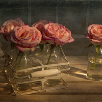 Buy canvas prints of Milk Bottle Roses by Ann Garrett