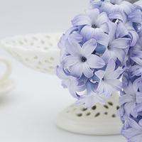 Buy canvas prints of Hyacinth by Ann Garrett