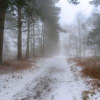 Buy canvas prints of Last Snow on Cannock Chase by Ann Garrett