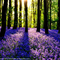 Buy canvas prints of BLUEBELL WOOD by David Atkinson