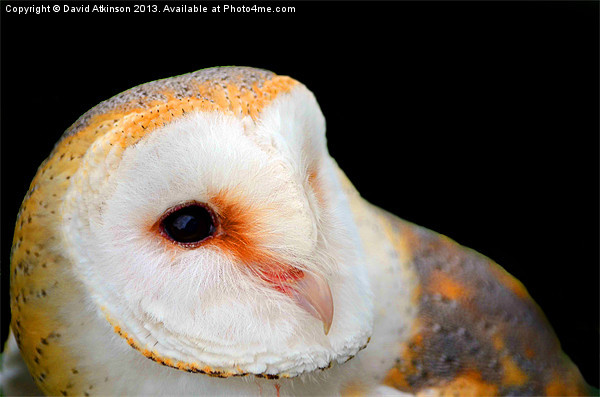 BARN OWL Canvas print by David Atkinson