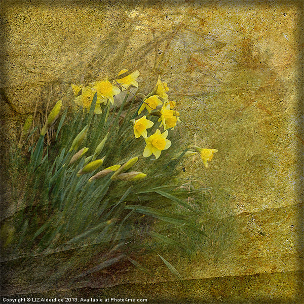 Spring Time Canvas print by LIZ Alderdice