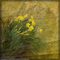 Buy canvas prints of Spring Time by LIZ Alderdice