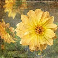 Buy canvas prints of Nearly Vincent by LIZ Alderdice