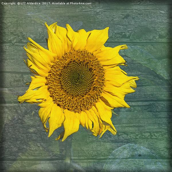 Sunflower Canvas print by LIZ Alderdice