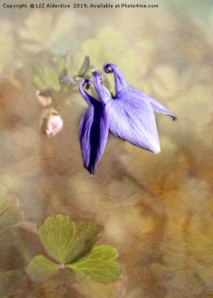 Blue Columbine Canvas print by LIZ Alderdice