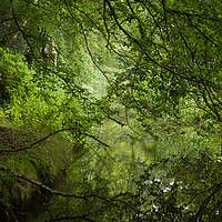 Buy canvas prints of Woodland Stream by LIZ Alderdice