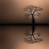 Buy canvas prints of Sentinels by Natures' Canvas: Wall Art  & Prints by Andy Astbury