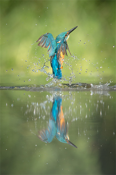 Male Kingfisher Canvas print by Natures' Canvas: Wall Art  & Prints by Andy Astbury