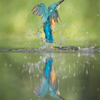 Buy canvas prints of Male Kingfisher by Natures' Canvas: Wall Art  & Prints by Andy Astbury