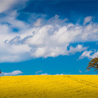 Buy canvas prints of Spring in the Countryside by David Tyrer