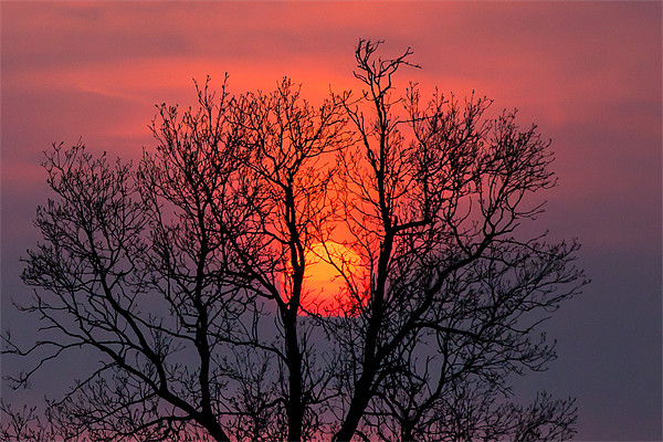 Setting sun behind the trees Canvas Print by David Tyrer