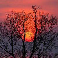 Buy canvas prints of Setting sun behind the trees by David Tyrer