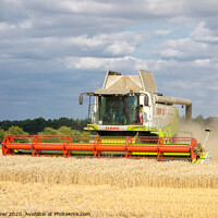 Buy canvas prints of The Harvest by Dave Tyrer