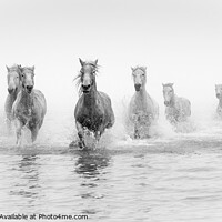 Buy canvas prints of White Horses - Camargue by David Tyrer