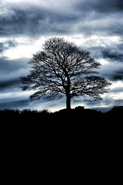 Lone Tree Silhouette Blue Canvas print by Neil Ravenscroft