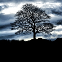 Buy canvas prints of Lone Tree Silhouette Blue by Neil Ravenscroft