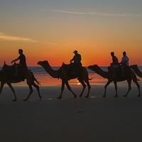 Buy canvas prints of Camels on the Beach at Broome W.A by Pauline Tims