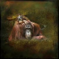Buy canvas prints of  Parent And Child by Dave Godden