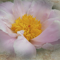 Buy canvas prints of Beauty Woven In by Judy Hall-Folde