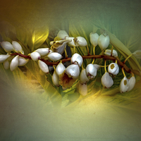 Buy canvas prints of Nature Glows by Judy Hall-Folde