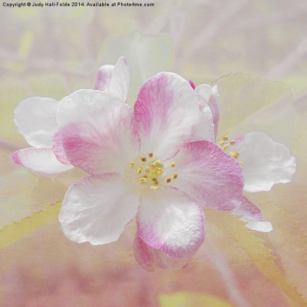 Apple Blossom Canvas print by Judy Hall-Folde