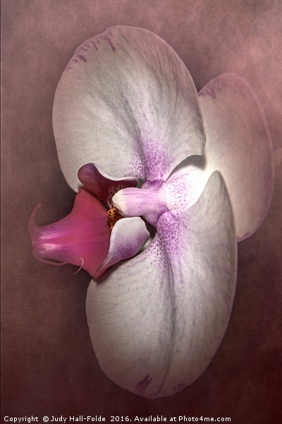 Exotic Orchid Canvas Print by Judy Hall-Folde