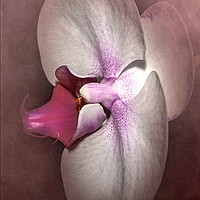 Buy canvas prints of Exotic Orchid by Judy Hall-Folde