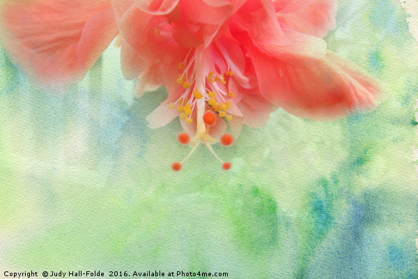 Sofly Colored Canvas print by Judy Hall-Folde