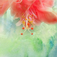 Buy canvas prints of Sofly Colored by Judy Hall-Folde