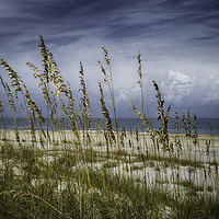 Buy canvas prints of Through the Sea Oats by Judy Hall-Folde