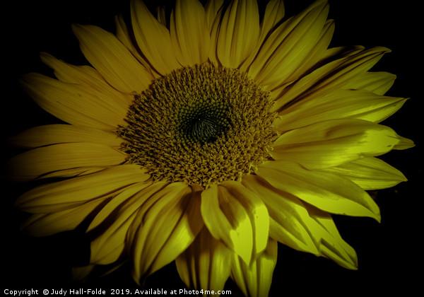 Sunflower Close Up Canvas print by Judy Hall-Folde