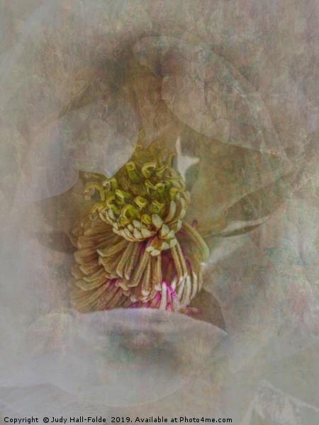Magnolia Canvas print by Judy Hall-Folde