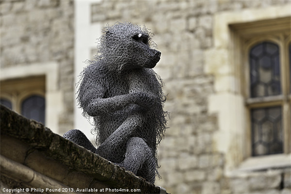 Monkey at Tower of London Framed Print by Philip Pound