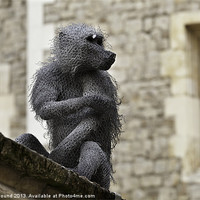 Buy canvas prints of Monkey at Tower of London by Philip Pound