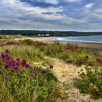 Buy canvas prints of  Port Eynon Sand Dunes by Ian Lewis