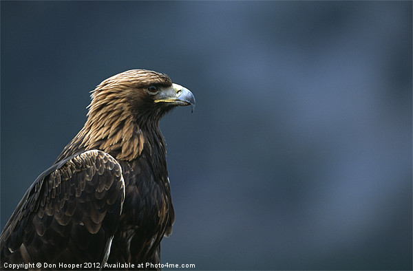 GOLDEN EAGLE Canvas print by Don Hooper