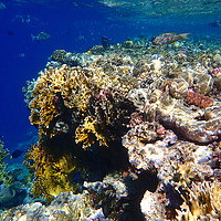Buy canvas prints of Red Sea Underwater by mark humpage