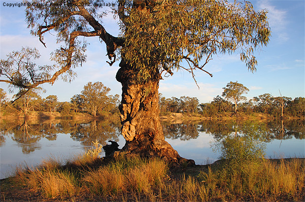 River Murray reflections Canvas print by Carole-Anne Fooks