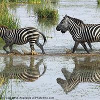 Buy canvas prints of Zebra Crossing Kenya by Carole-Anne Fooks