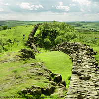 Buy canvas prints of Hadrians Wall In The Landscape by Carole-Anne Fooks