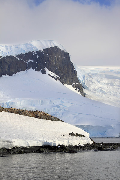 Trinity Island & The Antarctic Peninsula Canvas Print by Carole-Anne Fooks