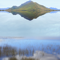 Buy canvas prints of Melaleuca Dreaming by Carole-Anne Fooks